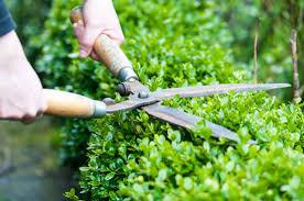 profesionalno urejanje okolice in vrtov