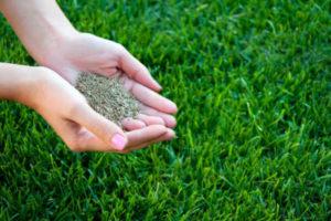 sejana trava urejanje okolice