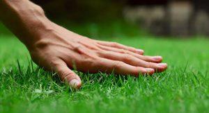 oskrba travne ruše