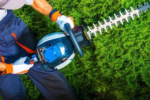 obrezovanje rastlin - urejanje okolice