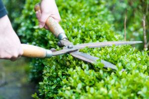 Urejanje okolice - obrezovanje rastlin