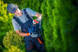 urejanje okolice obrezovanje rastlin